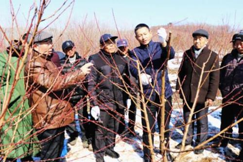 杨教授就桃树新品种推介,冬季整形修剪,科学施肥,病虫害防治等方面
